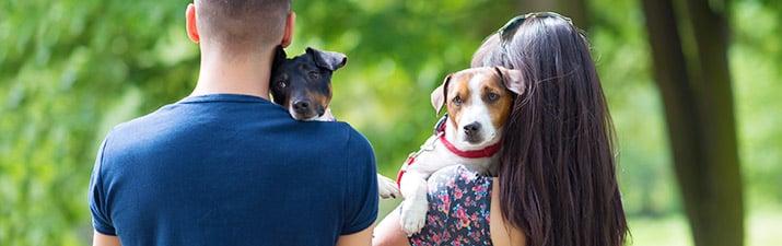 Partnerwahl: Mann und Frau mit zwei Hunden von hinten